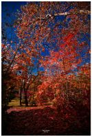 Red Leaves by geckokid