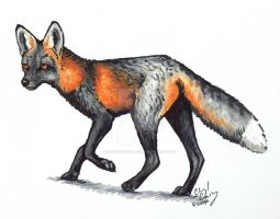Cross Fox by silvercrossfox