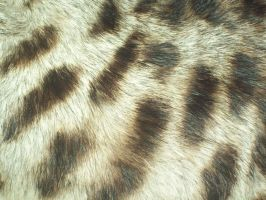 STOCK - Fur Texture 003 by Chaotic-Oasis-Stock