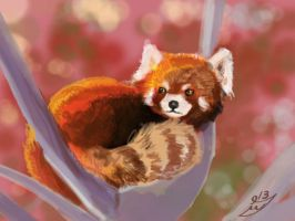 Red panda half hour by HipsterAnt