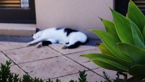 Sleepeh Kitteh by aNdre-W
