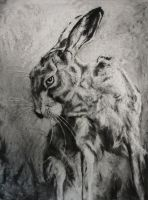 Rabbit by Alexander-Landerman