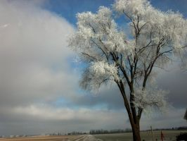 Frost Coated Lattice of Limbs by heavymidst