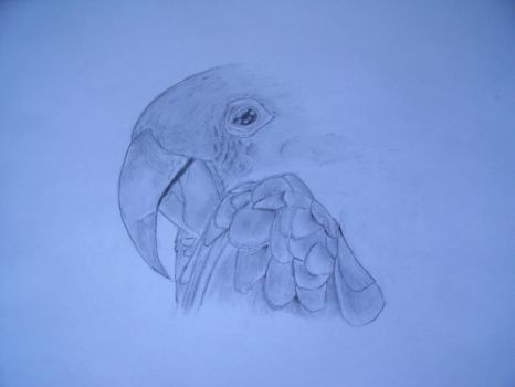 Parrot by Drawingdude1098
