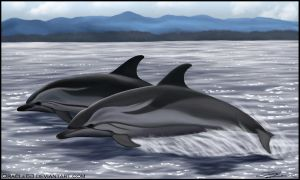Striped dolphins by Oracle88