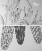 Maize - detail by scorpiodesign