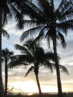 palms by the pier by dreadedhippie