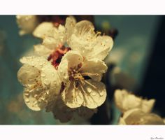 Spring :) by Lucie-Lilly