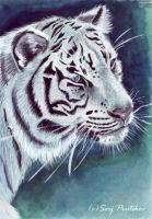 White Tiger by PumaSpirit