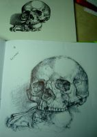 Skull - Pen Practice by jobethlovess