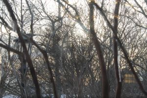 Sunset Through a Forest of Ice by Grangerbookworm
