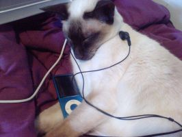 Cat listens to Music by Toph-Rulz16