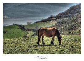 Freedom by frescendine