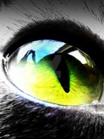 Cat's Eye by That1nerdychick