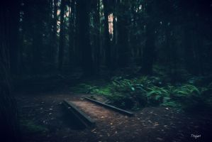 Deep In The Forest by Trajan-pro
