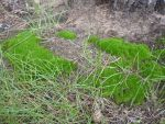 Green moss and nothing more XD by KillSpiegel