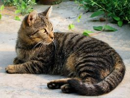 Viorel's cat by Nazareanu