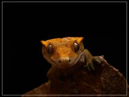 Crested Gecko by EC-designs