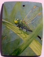 dragonfly by roberti