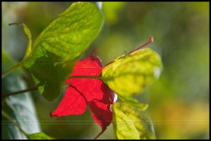 First sign of fall by Nameda