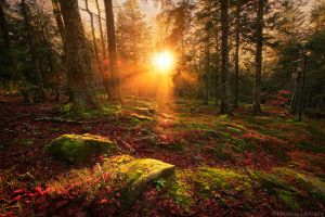 Woodland Enchantment by MaximeCourty