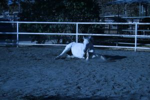 gray horse stock 4 by xbr0kendevotion