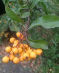 Fall's fruits by Wilczyca-97
