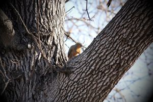 Squirrel 5 by candy691977