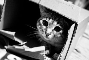 The cat in the box... by Yohao88DG