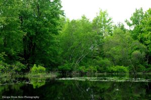 Green Reflections by jltrafton