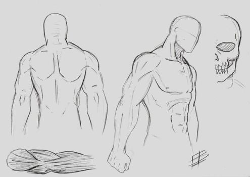 Male Anatomy Study 1 by Aspiring-Mangaka