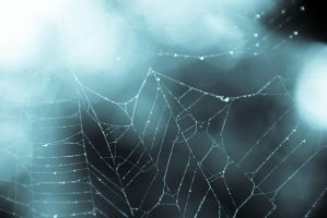 Icy web by fadingechoes101