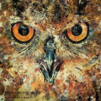 Eagle Owl Eyes: Haiku Paint Edit by nerdboy69