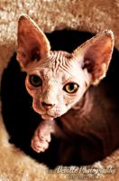 Morticia, the hairless pussy by DevillePhotography