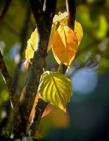 Autumns Changing Colors by Tailgun2009