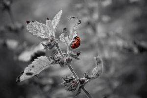 Black, white and red by Broxmonkey