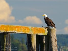 Eagle with a view by ByteStudio