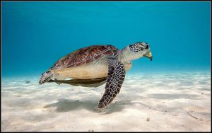 Eagle Turtle ... by fisher57