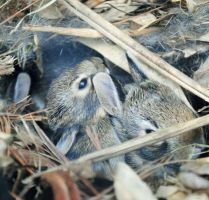 baby bunnies by SoMuchMoreThanYou