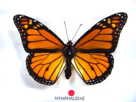 moths and butterflies stock 18 by hatestock