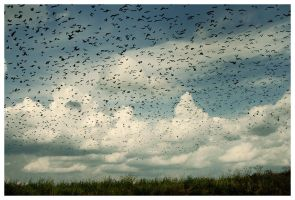 Birds of passage by ejan