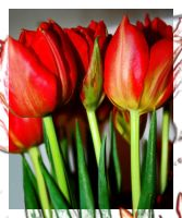 Tulips v3 by simoner