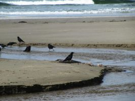 Crow 7 -- Sept 2009 by pricecw-stock