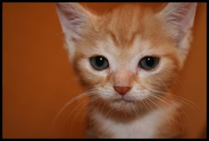 Kitten by emptyremains