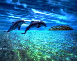 dolphins by ghostd7