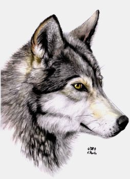 Watercolor wolf by ManiaAdun
