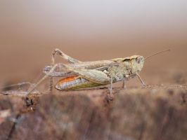 grashopper by pagan-live-style