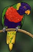 Parrot by nancy-kelpie