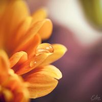 Apiary by Eibography