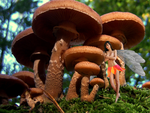 Fairy 03 - Under the mushroom by RLC69